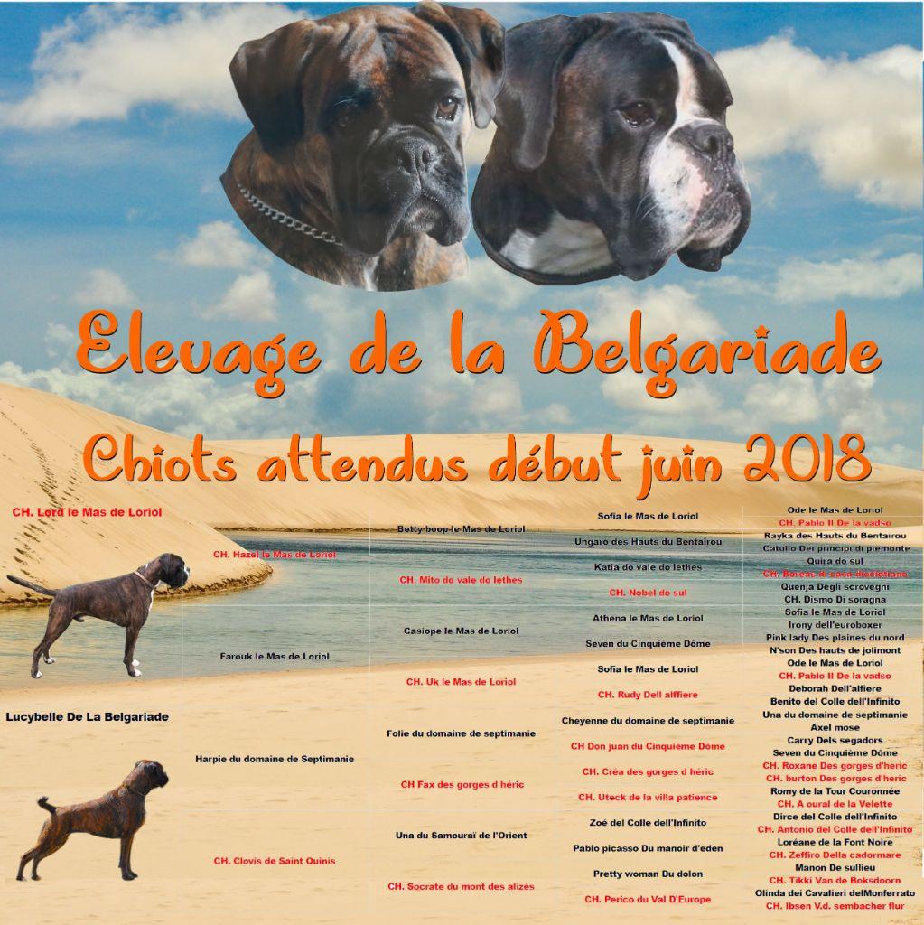 De La Belgariade - Boxer - Portée née le 03/06/2018