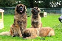 Gaza des lions de la ferronniere