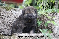 Mr Jaune - Orgrim
