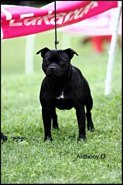 Notts And Derby Dog Show