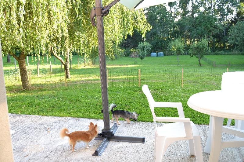 photo elevage du moulin aux merles eleveur de chiens chihuahua poil long lof dans l 39 yonne 89. Black Bedroom Furniture Sets. Home Design Ideas