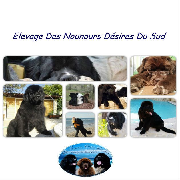 Des Nounours Desires Du Sud - Bonne Visite sur mon Nouveau site Bientôt en ligne