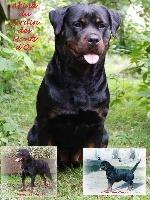 Chien Elevage Vom Hause Kina Eleveur De Chiens Rottweiler