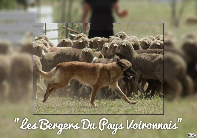 De FinBerYo - Finwë au travail sur troupeaux d' Ovins