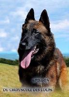 Apollon du crépuscule des loups