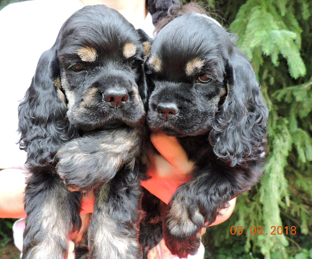 Hall Of Lords - Beaux Chiots Disponibles !