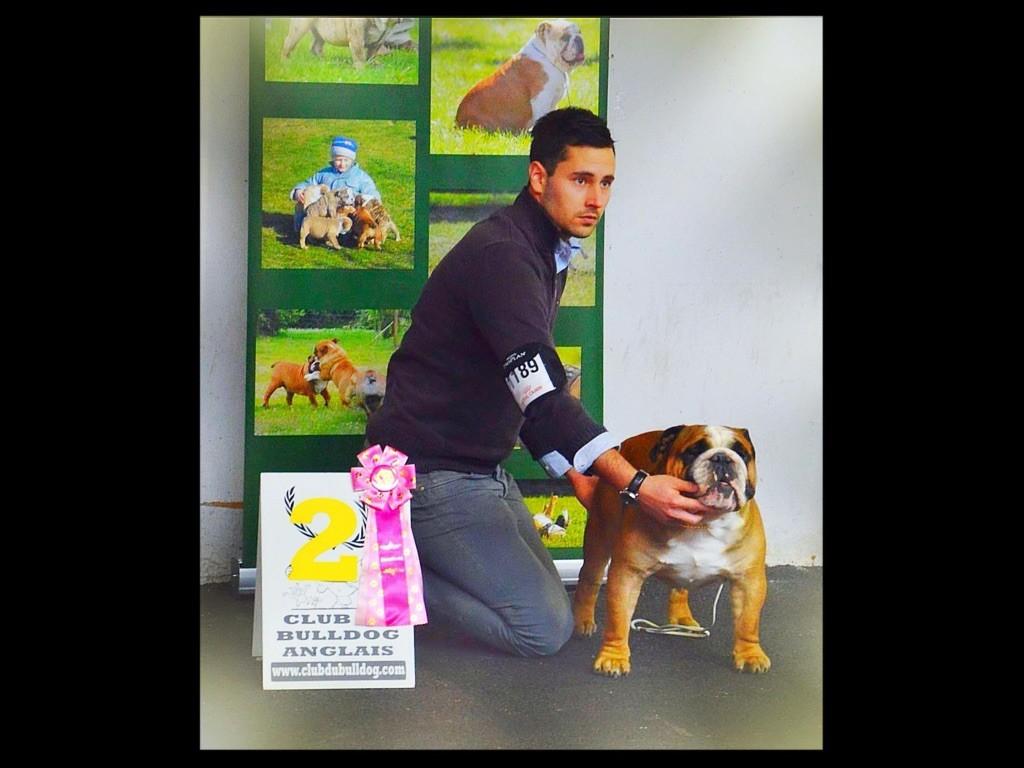 Publication : Myally Bulldog  Auteur : MyAlly