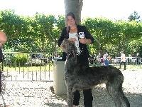 Itha Of Highland Wolfhound