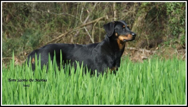 http://www.chiens-de-france.com/photo/eleveurs/18/3431/album/8fccac67-59eb-7354-cda5-bc2f861fd176.jpg