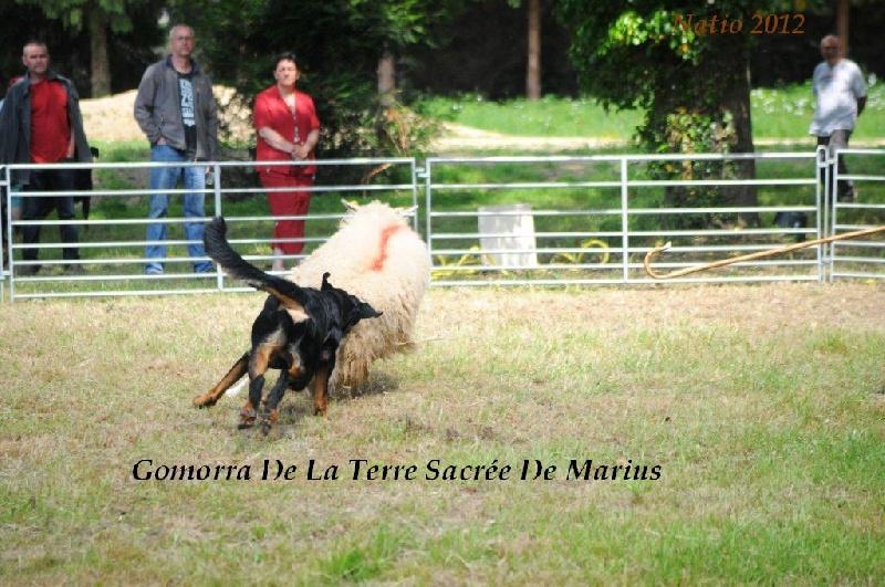 Gomorra De La Terre Sacrée De Marius
