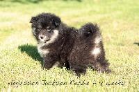 Jackson Rebbie