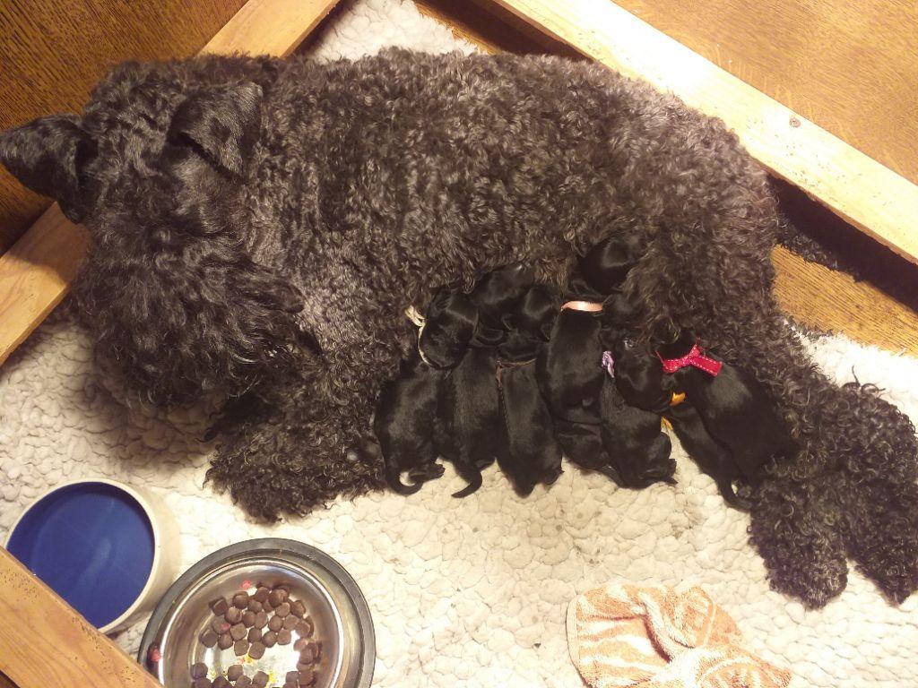 de Glenderry - Les bébés sont arrivés !