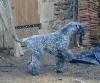 - BLUE SUEDE SHOES de GLENDERRY