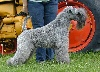 - CHAMPION CAIUS BLUE DE GLENDERRY