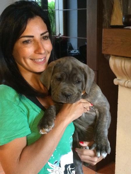 Arkan's Dog - Cane Corso - Portée née le 21/04/2015