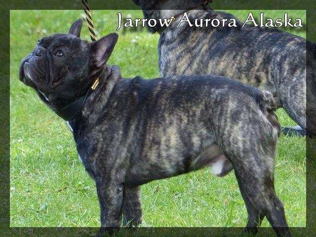 Aurora Alaska - Jarrow : Cotation 3 !