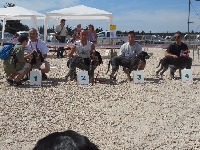 Des Gorges De Ciara - Résultats Nationale d ' élevage 2015 Aumont d' Aubrac