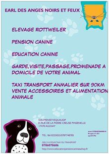 Photo PENSION CANINE AULNAYSIENNE