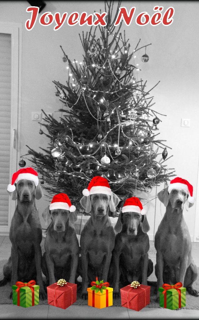 Legend's Safir - Joyeux Noël !!!