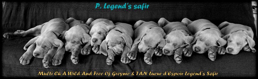 Legend's Safir - 8 Merveilles pause sieste