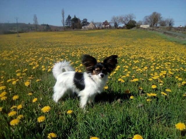 Des Nectars D'orion - Et une photo d'Ora !