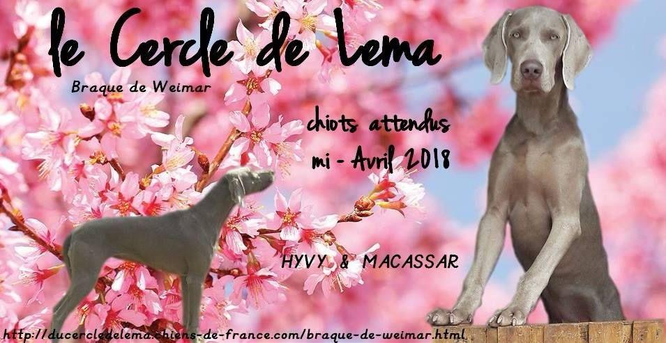 Du Cercle De Léma - Braque de Weimar - Portée née le 18/04/2018