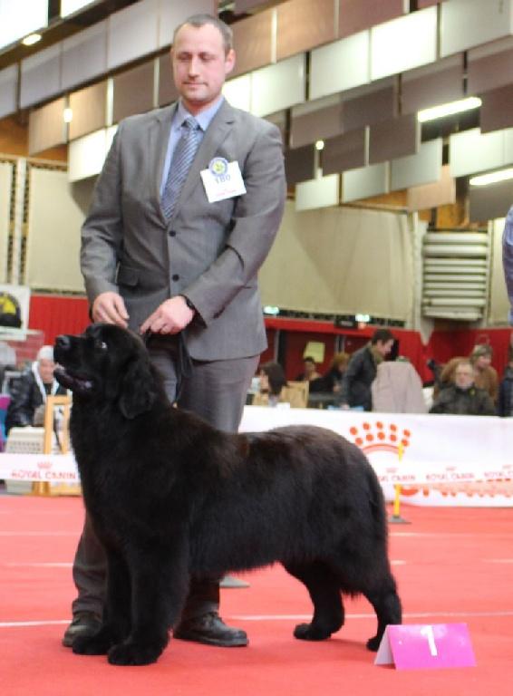 Des Jardins De Vesco - Exposition canine d'Amiens