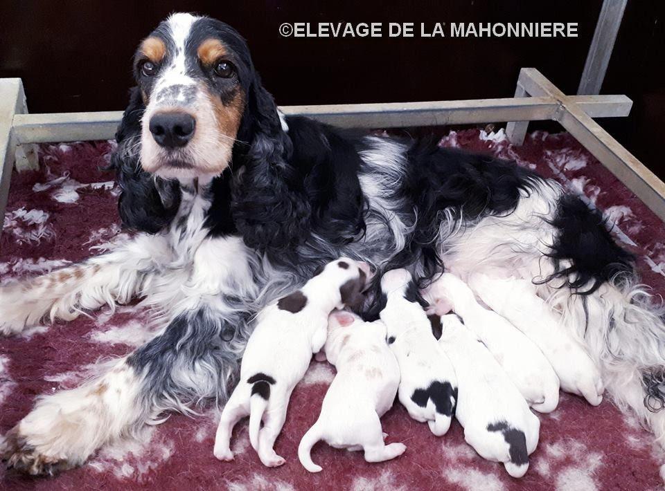 De La Mahonnière - Naissances à l'élevage de La Mahonnière