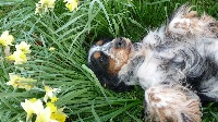 Guess lilli des aubépines de la Vilco