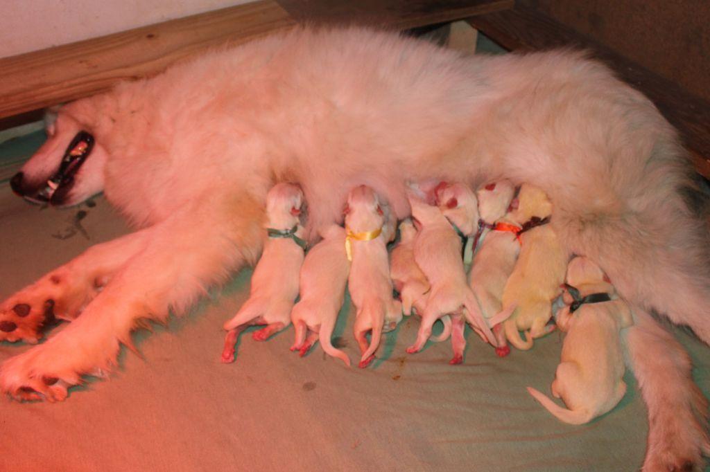 Du Jardin Des Petits Choux - Op La !!! Les voilà les petits bébés de Merveille et Lover !!!