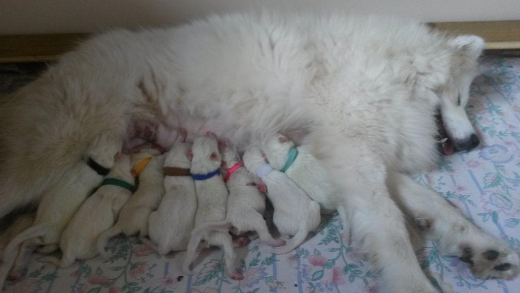 Du Jardin Des Petits Choux - Oh La la !!! ça y est le bébés de Meringue et Lover sont arrivés !!!