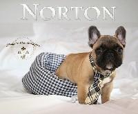 Norton des Pommes d'Or des Hesperides