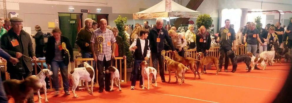 De la diane de belrem - Expo d'Amiens : CACS-CACIB pour Moun