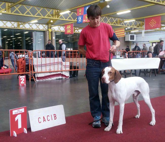 De la diane de belrem - Expo de Mouscron en Belgique : CAC-CACIB-BOB pour Junior