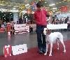 - Expo de Mouscron en Belgique : CAC-CACIB-BOB pour Junior