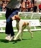 - CACS pour Moun au grand prix des chiens de chasse du Game Fair