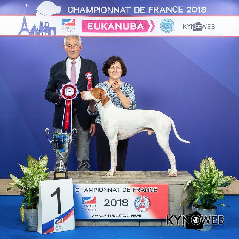 De la diane de belrem - Issan, meilleur chien du 7ème groupe au championnat de France !