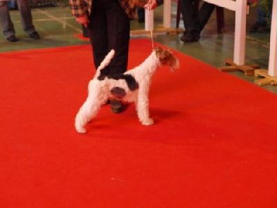 du manoir des presles - Espion Dog du Haillet des Corneiredes gagne la spéciale à BOURGES