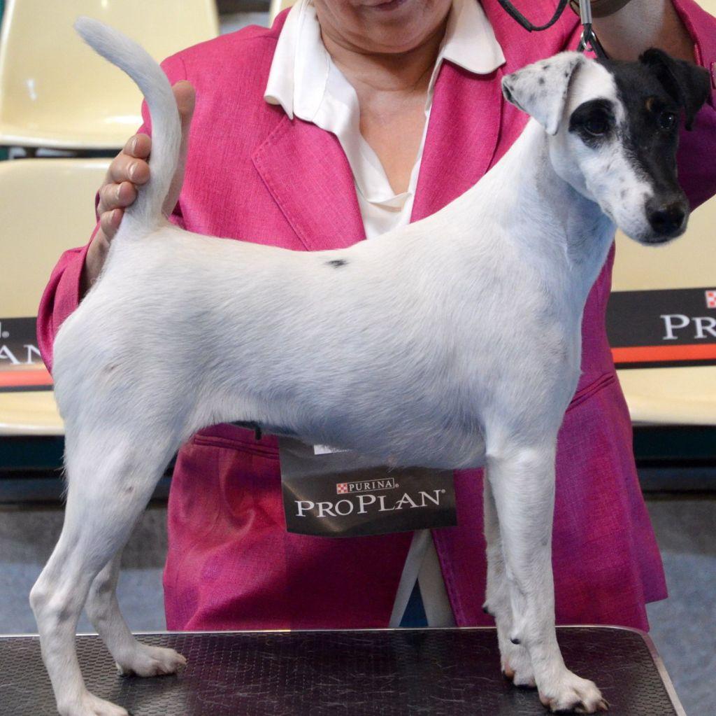 du manoir des presles - Gaufrette Vanille  Championne de Belgique