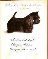 CH. Voltaire du manoir des presles
