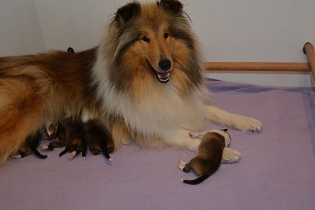 Ashbury - Mimi est devenue maman