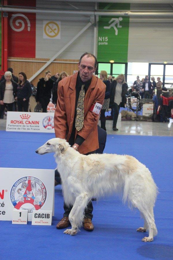 Du grand fresnoy - PARIS DOG SHOW