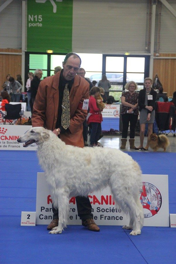 Du grand fresnoy - PARIS DOG SHOW
