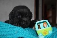 Femelle Noire