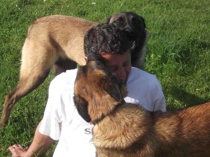 Accueil - Elevage Des Flèches De Yuma - eleveur de chiens