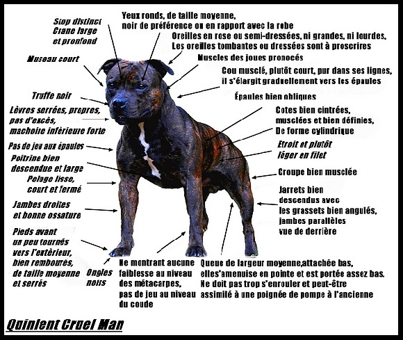 Staffy Puppy Weight Chart Rebellions