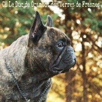 CH. Le duc de gramont Des Terres De Frasnes
