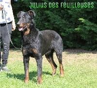 Julius des Feuilleuses