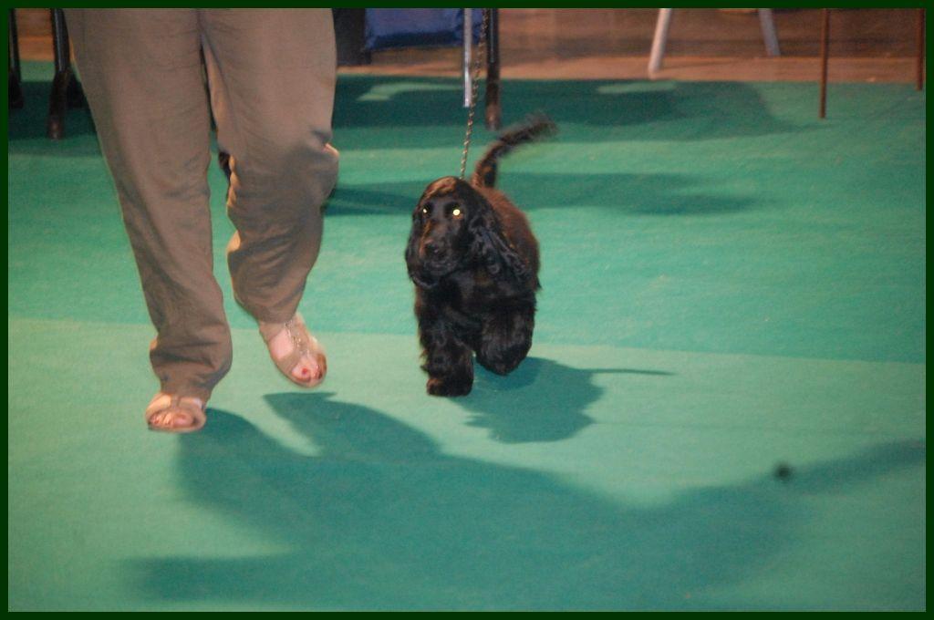 The Holly's Field - Expo Canine Internationale de Liège 23/07/2017