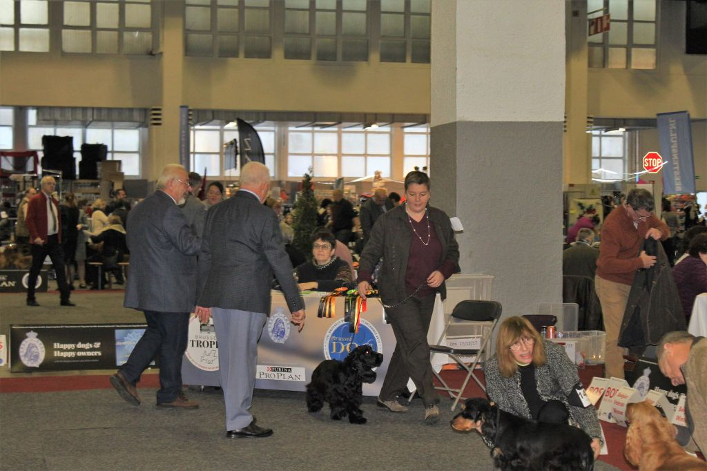 The Holly's Field - Brussel dog show 17 / 12 / 2017: Quaterback The Holly's Field